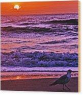 Sunrise Sea And Seagull Wood Print