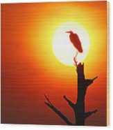 Sunrise Sentinel Wood Print