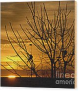 Sunrise Song Wood Print