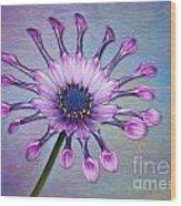 Sunscape Daisy Wood Print