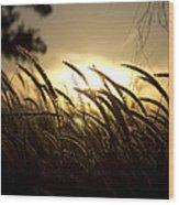 Sunset Behind Tall Grass Wood Print