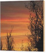 Sunset Branches Wood Print