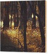 Sunset Falls Over Seeding Grasses Wood Print by Jason Edwards