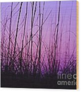 Sunset Grasses Wood Print