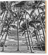 Sunset Grove At Palm Beach Wood Print