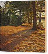Sunset In Woods At Lake Shore Wood Print