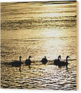 Sunset Over Canada Geese Wood Print by Joseph Rossi