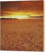Sunset Over Wheat Field Wood Print