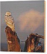 Sunset Owl Wood Print