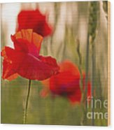 Sunset Poppies. Wood Print
