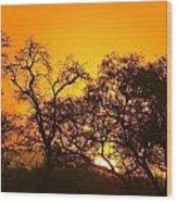 Sunset, Sabi Sand Reserve, Mpumalanga Wood Print