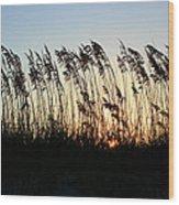 Sunset Sea Oats Wood Print