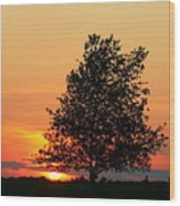 Square Photograph Of A Fiery Orange Sunset And Tree Silhouette Wood Print