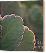 Sunset Succulents Wood Print