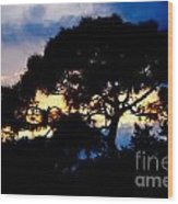 Sunset With Pine Tree Wood Print