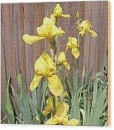 Sunshine Bright Yellow Iris Wood Print