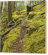 Sunshine Coast Trail Wood Print