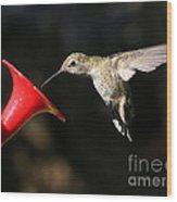 Sunshine On Hummingbird Wood Print