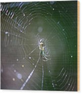 Sunshine On Swamp Spider Wood Print