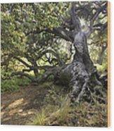 Sunstar Oak Wood Print