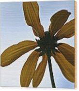 Sunstar Wood Print