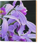 Super Orchid Wood Print