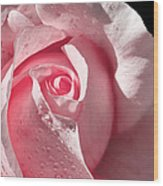 Supple Pink Rose Dipped In Dew Wood Print