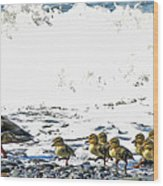 Surf Ducks Wood Print