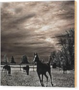 Surreal Horses Infrared Nature  Wood Print by Kathy Fornal