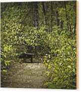 Surrounded By American Beauty Wood Print by Kim Henderson
