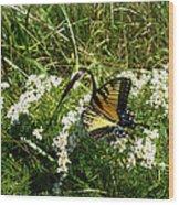Swallow Tail  Wood Print