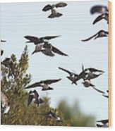 Swallows - All In The Family Wood Print