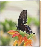 Swallowtail - Lite And Lively Wood Print