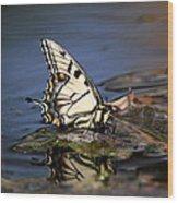 Swallowtail - Walking On Water Wood Print