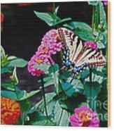 Swallowtail Among The Zinnias Wood Print