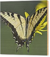 Swallowtail And Friend Wood Print