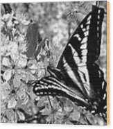 Swallowtail Butterfly And Plum Blossoms Wood Print