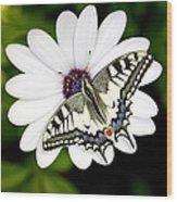 Swallowtail Butterfly Resting Wood Print