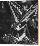 Swallowtail On Lantana Wood Print
