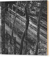 Swamp At Sunset Wood Print