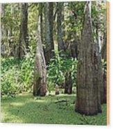 Swamp Knees Wood Print