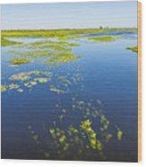 Swamp Lanscape II Wood Print