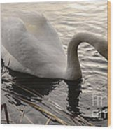 Swan Along The Shore Wood Print