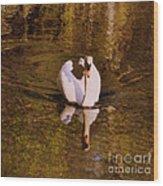 Swan At Susan Lake Wood Print