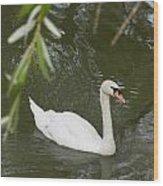Swan Enjoying A Swim Wood Print