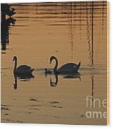 Swan Family At Sunset Wood Print by Camilla Brattemark
