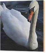 Swan Flying In The Water  Denmark Wood Print
