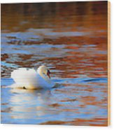 Swan Gold And Blue Wood Print