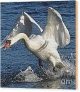 Swan In Action Wood Print