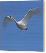Swan In Flight, Long Exposure Wood Print